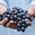 raisins-noirs-cuieillis