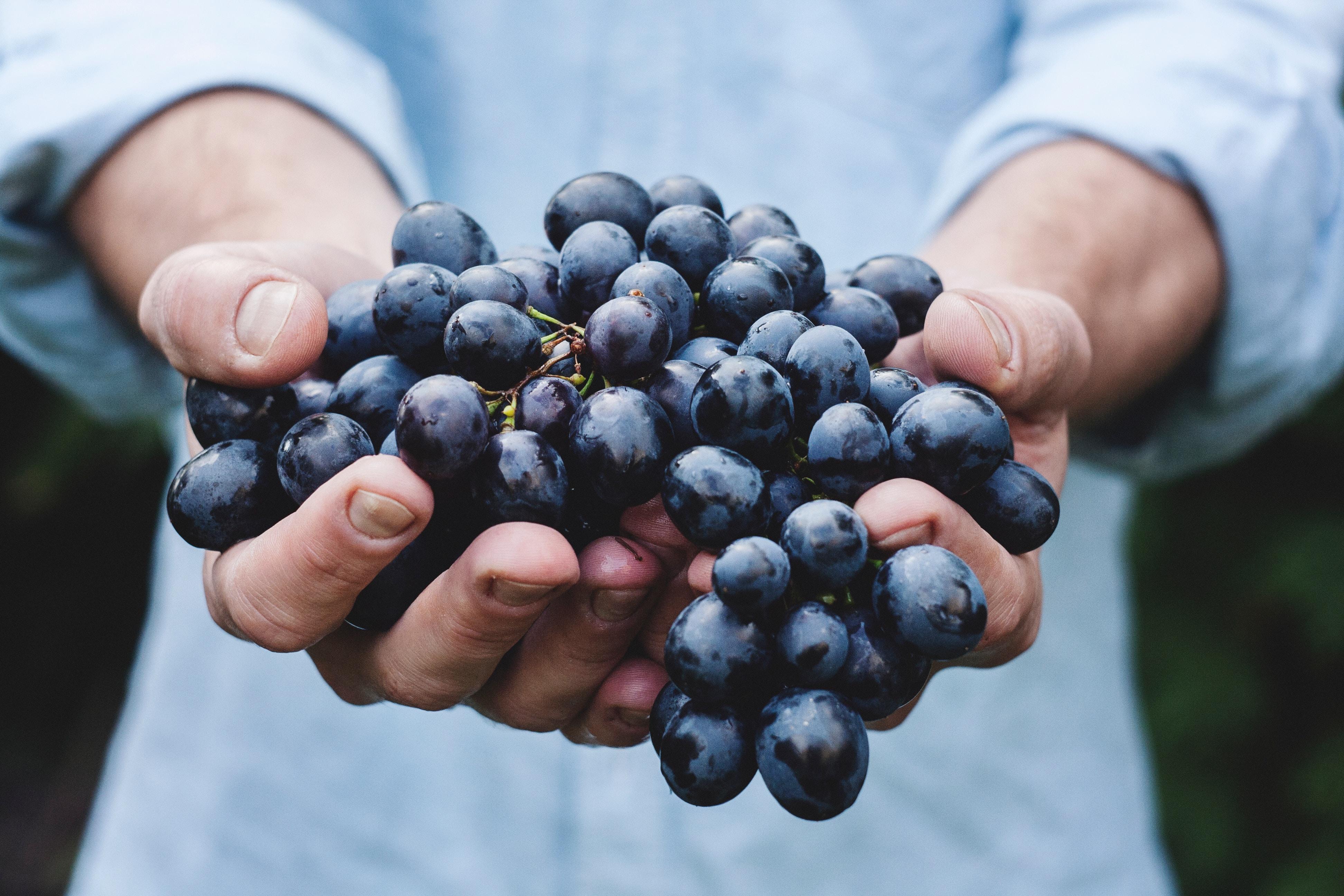 Les secrets des vins en biodynamie